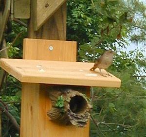 Birdhouse 2007-11