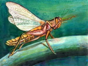 grasshopper, wings