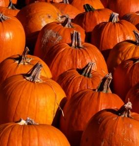 Pumpkins01 2009-10-18